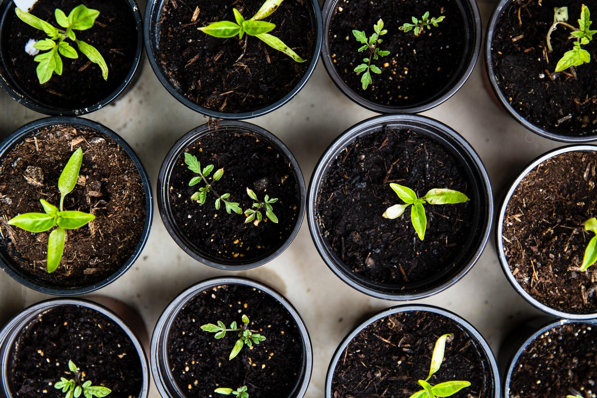 faire pousser des legumes en pots