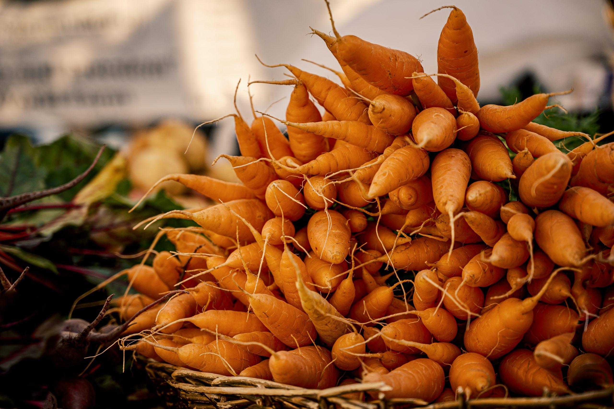 plantez des legumes racines