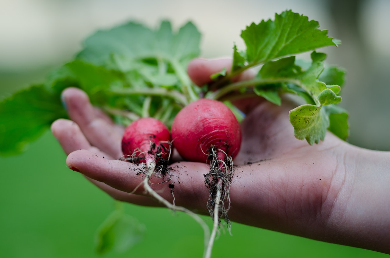 9 legumes qui poussent vite