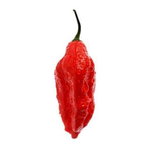 piment ghost