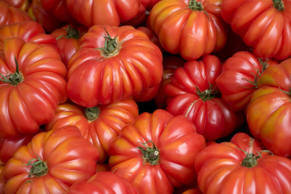 tomate Costoluto Genovese Valente