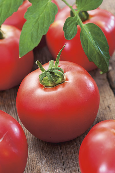 tomate-super-b