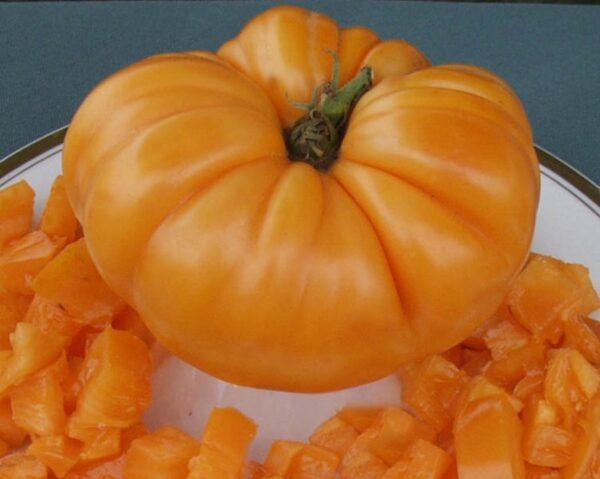 tomato amana orange semence ancestrale
